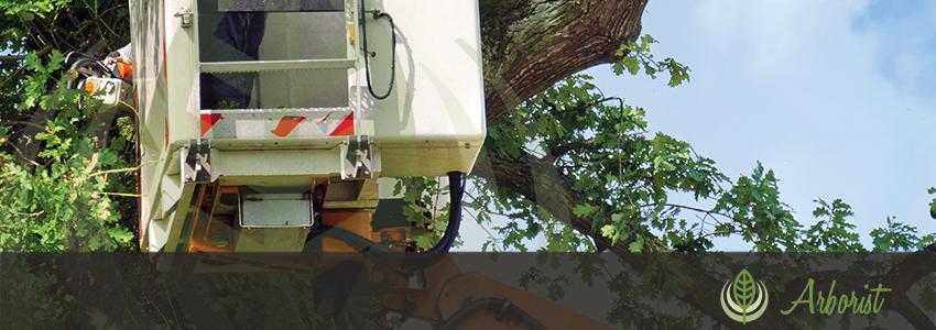 Tree_Removal_Arborist_Sacramento_05