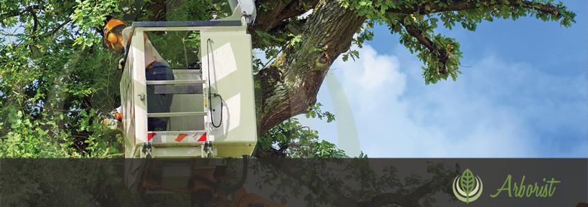 Tree_Removal_Arborist_Sacramento_02
